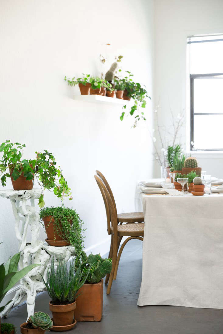 PlantLibrary-110-houseplants-terra-cotta-dining-room-gardenista