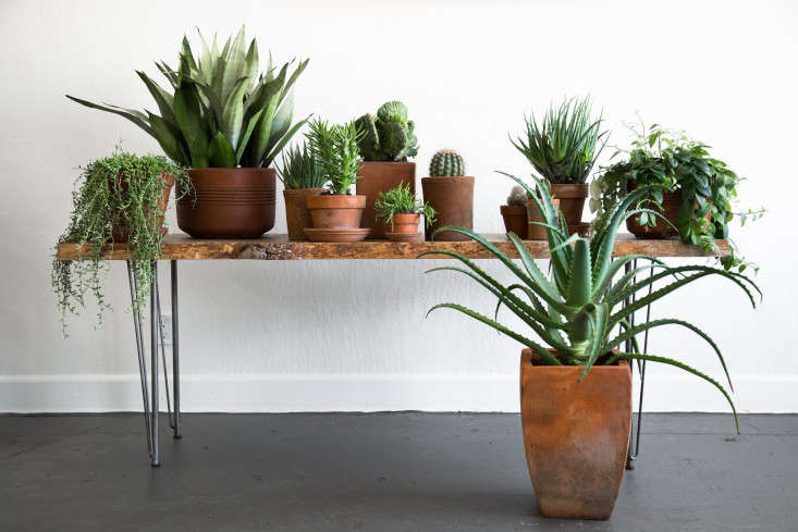 PlantLibrary-151-benchhouseplants-terra-cotta-dining-room-gardenista