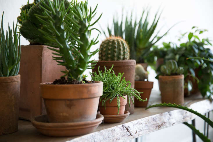 PlantLibrary-162-succulents-shelf-houseplants-terra-cotta-dining-room-gardenista