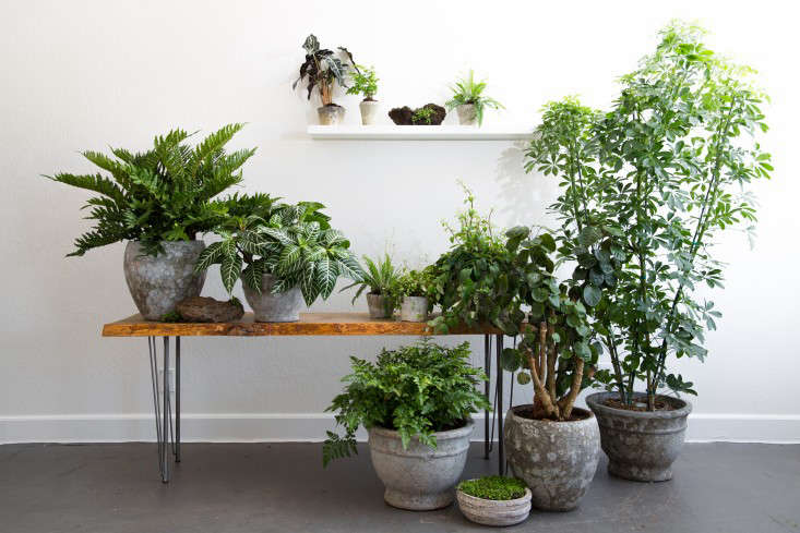 PlantLibrary-176-bench-tropical-houseplants-terra-cotta-dining-room-gardenista