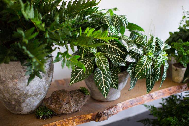 PlantLibrary-179-shelf-houseplants-terra-cotta-dining-room-gardenista