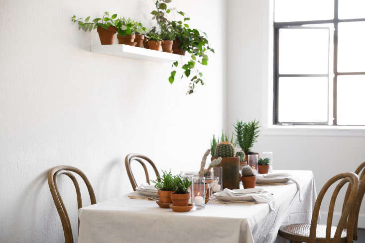 PlantLibrary-80-houseplants-terra-cotta-dining-room-gardenista