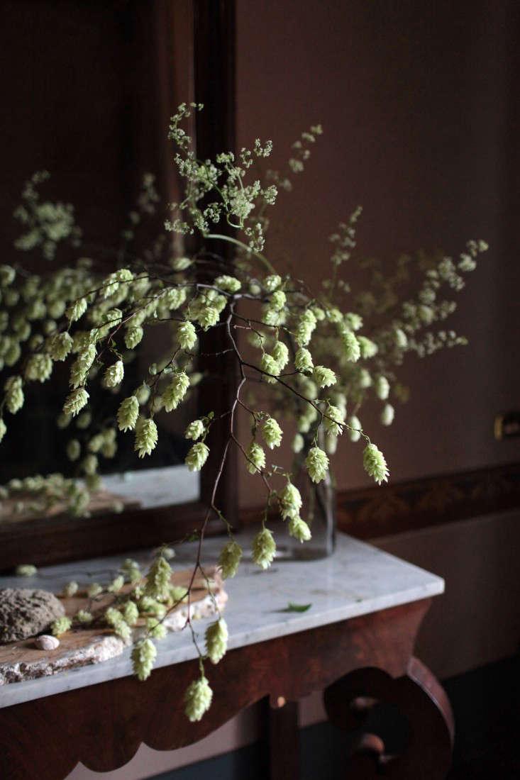Sophia Moreno-Bunge Tuscany Nettle tree without leaves