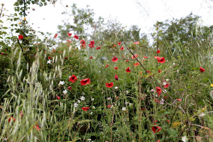 sophia moreno-bunge tuscany poppies