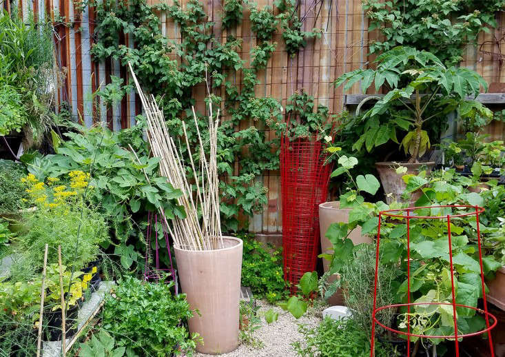 cages-gowanus-nurery-brooklyn-marie-vilojen-gardenista