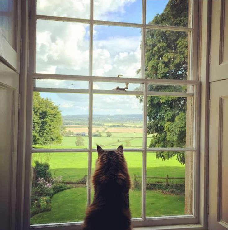 charlotte-fidler-cat-a-garde copy