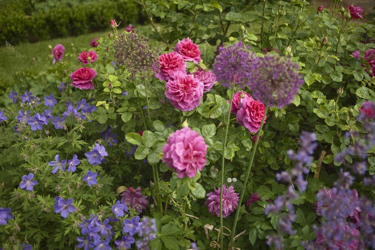 charlotte-fidler-gardenista-11-photo-jim-powell (1)