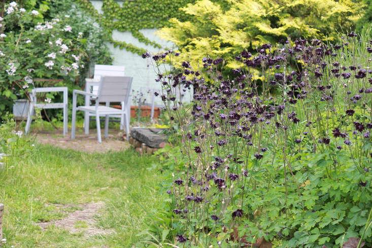 columbine_marieviljoen_outdoor_chairs_Brooklyn_Gardenista