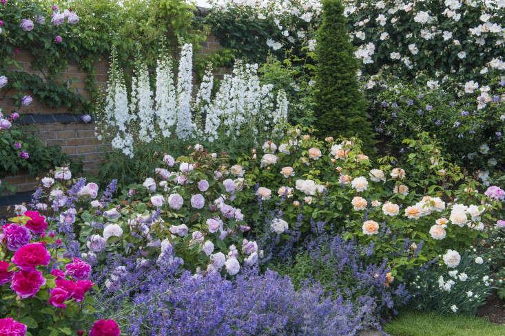 Rosa &#8\2\16;Olivia Rose Austin&#8\2\17; (Ausmixture) is \$\28.50 for US shoppers and &#8\2\16;The Lady Gardener&#8\2\17; (Ausbrass) shown at right is \$\28.50 in the US and £\23.50 in the UK.
