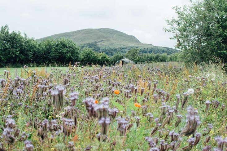 edinburgh-scotland-secret-herb-garden-jen-chillingsworth-gardenista-11