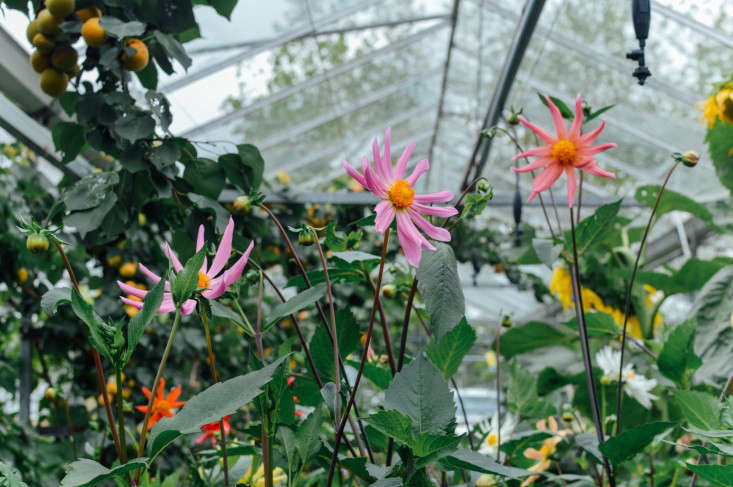 edinburgh-scotland-secret-herb-garden-jen-chillingsworth-gardenista-14