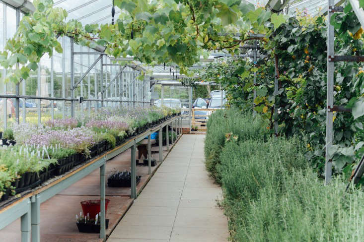 edinburgh-scotland-secret-herb-garden-jen-chillingsworth-gardenista-7