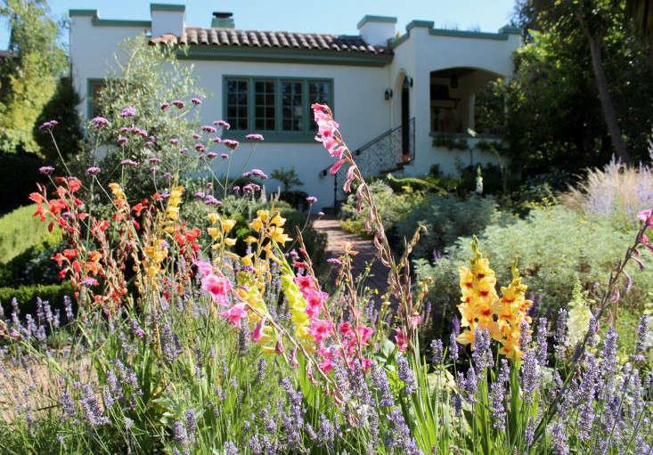 gladiolas-stucco-house-gardenista