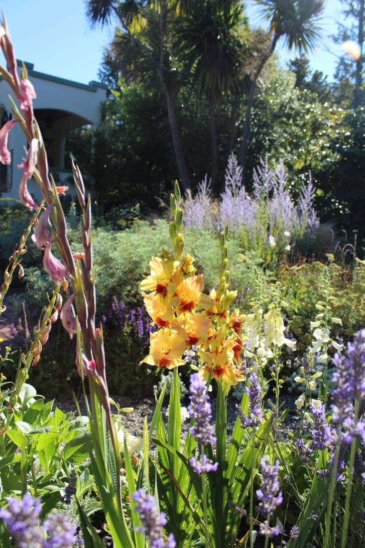 gladiolas-succession-blooming-gardenista