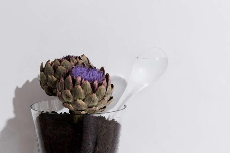 glass-watering-bulb-gardenista (1)
