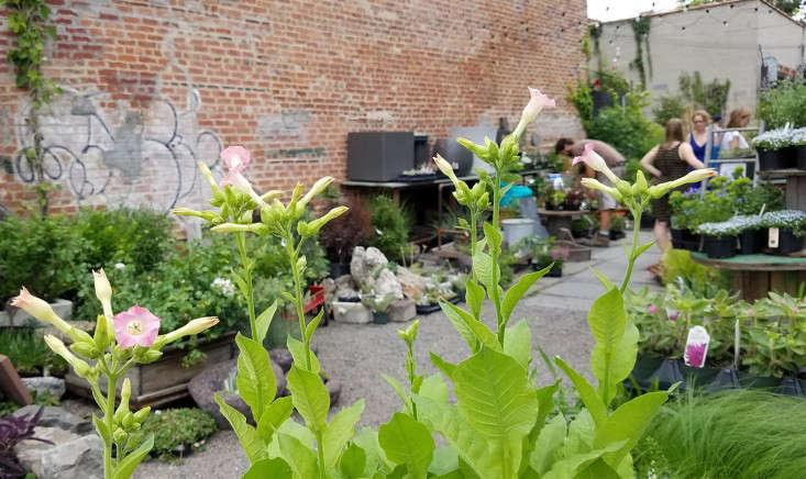 gowanus-nursery-weekendhours_marieviljoen-gardenista