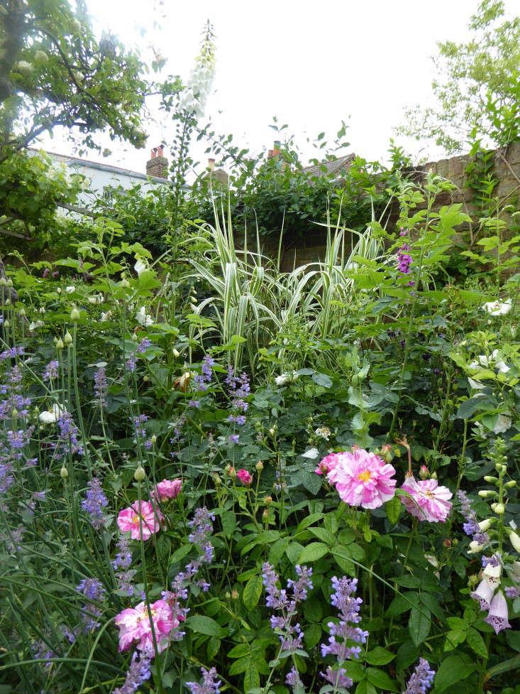 grasses-garden-beds--daisy-garnett-garden-london-gardenista