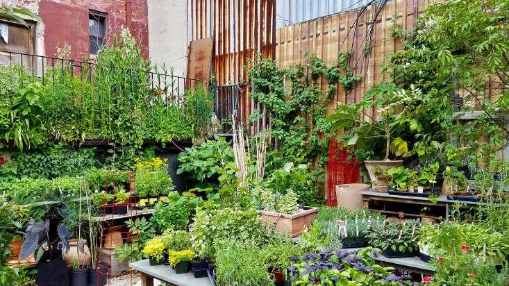 herb-section-gowanus-nursery-brooklyn-marie-viljoen-gardenista