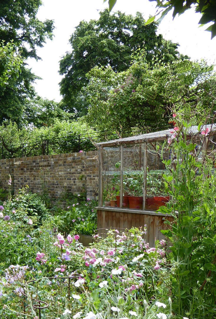 See more in Garden Visit: At Home with Writer Daisy Garnett in London. Photograph by Clare Coulson.