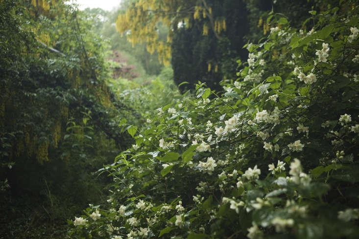rehab-diary-philadelphus-gardenista