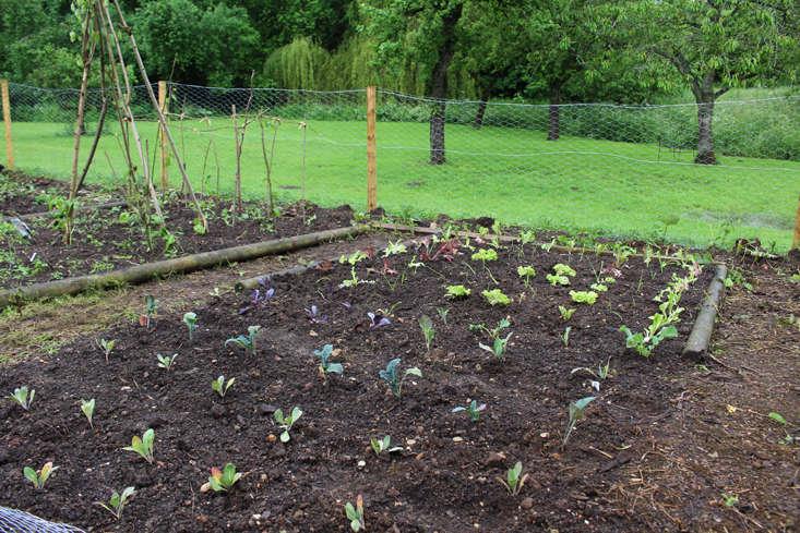rehab-diary-veg-beds-gardenista