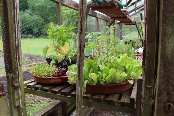 rehab-diary-veg-box-3-gardenista