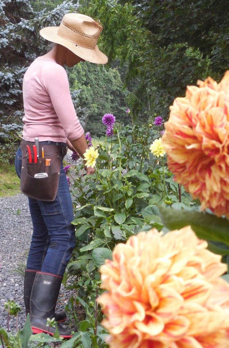 wheeler-munroe-farm-belt-gardenista