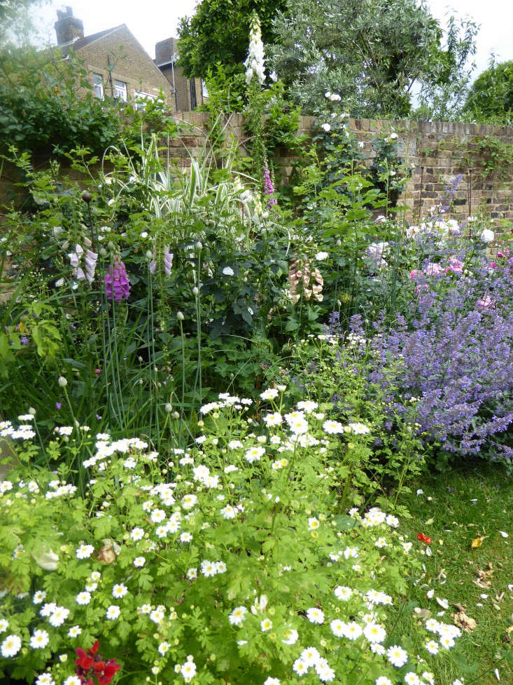 wild-foxgloves-daisy-garnett-garden-london-gardenista