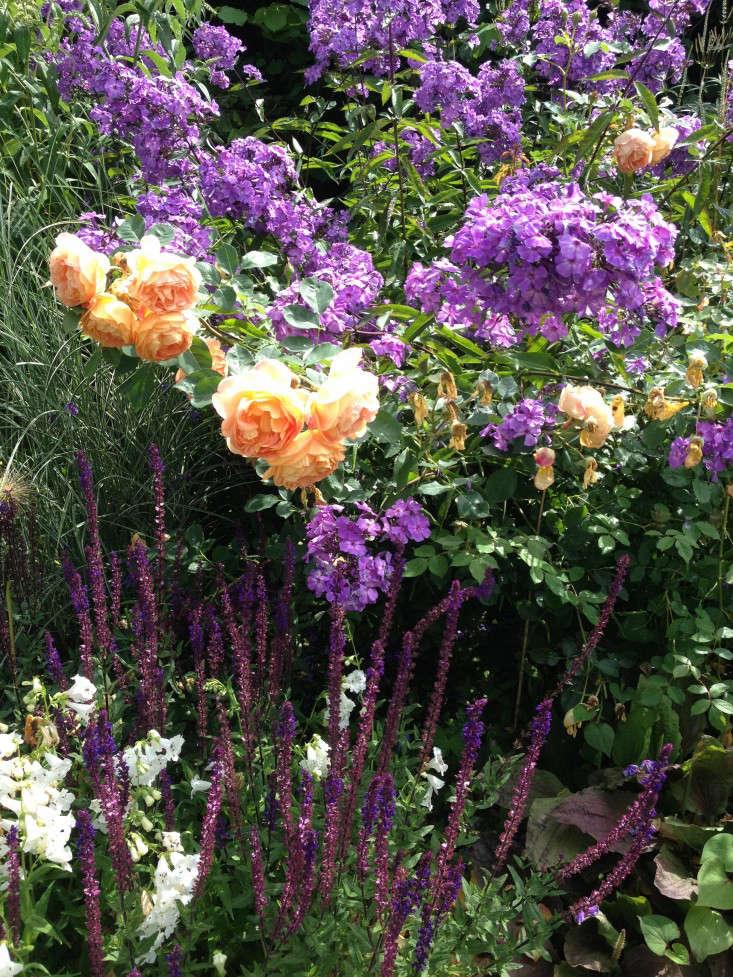 wollerton-garden-color-palette-roses-phlox-salvia-gardenista