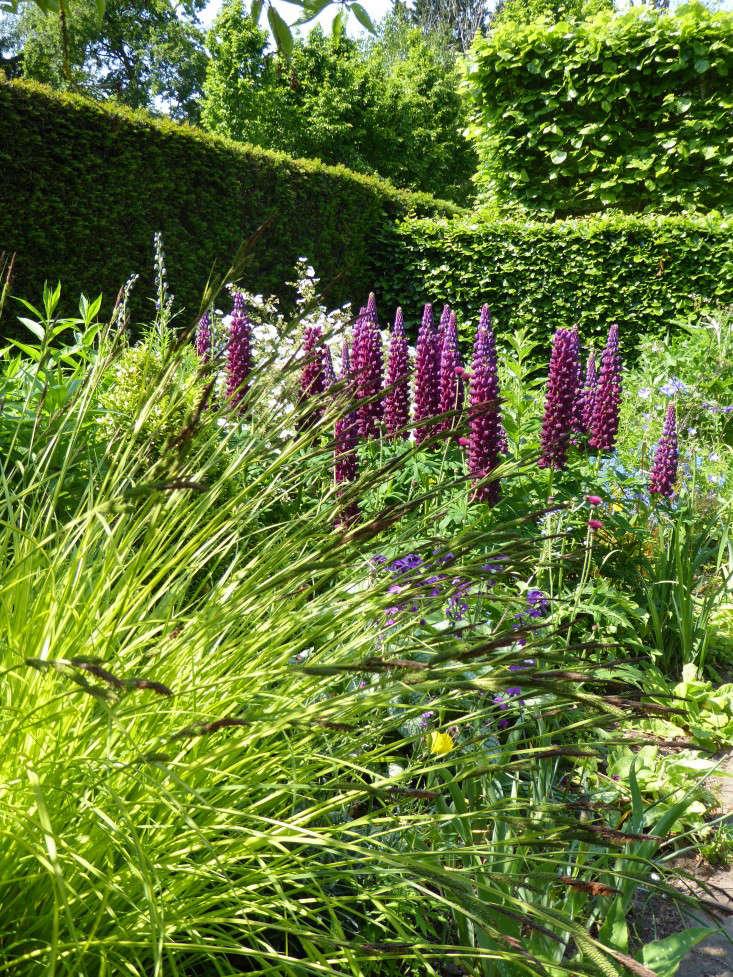 wollerton-garden-grasses-lupines-gardenista