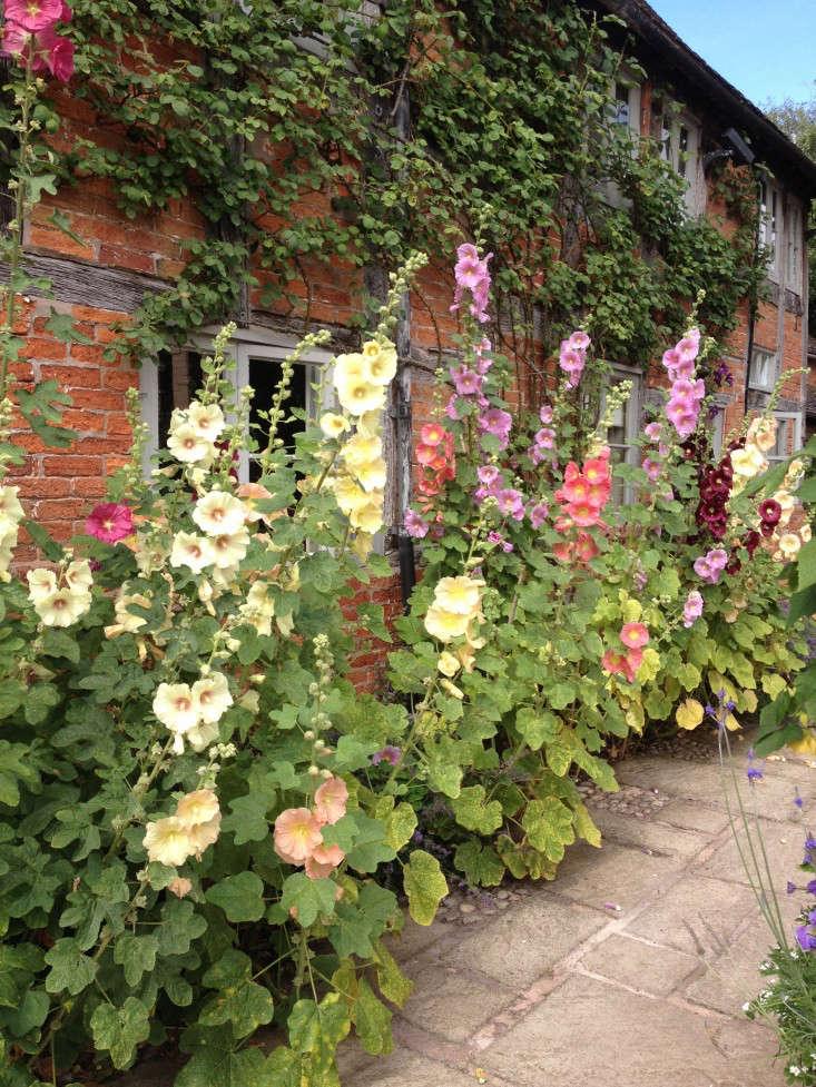 wollerton-garden-hollyhocks-brick-wall-facade-gardenista