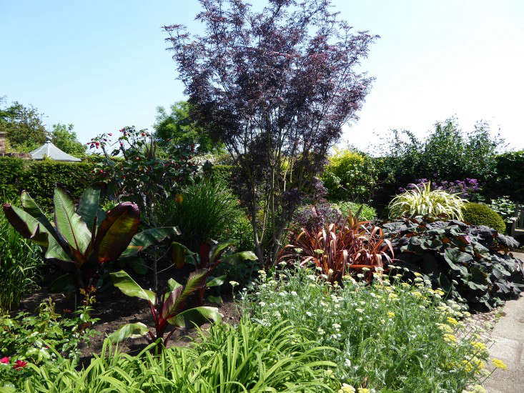 wollerton-garden-hot-tropical-plants-gardenista