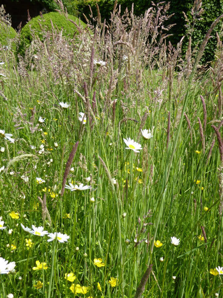 wollerton-garden-meadow-flowers-gardenista