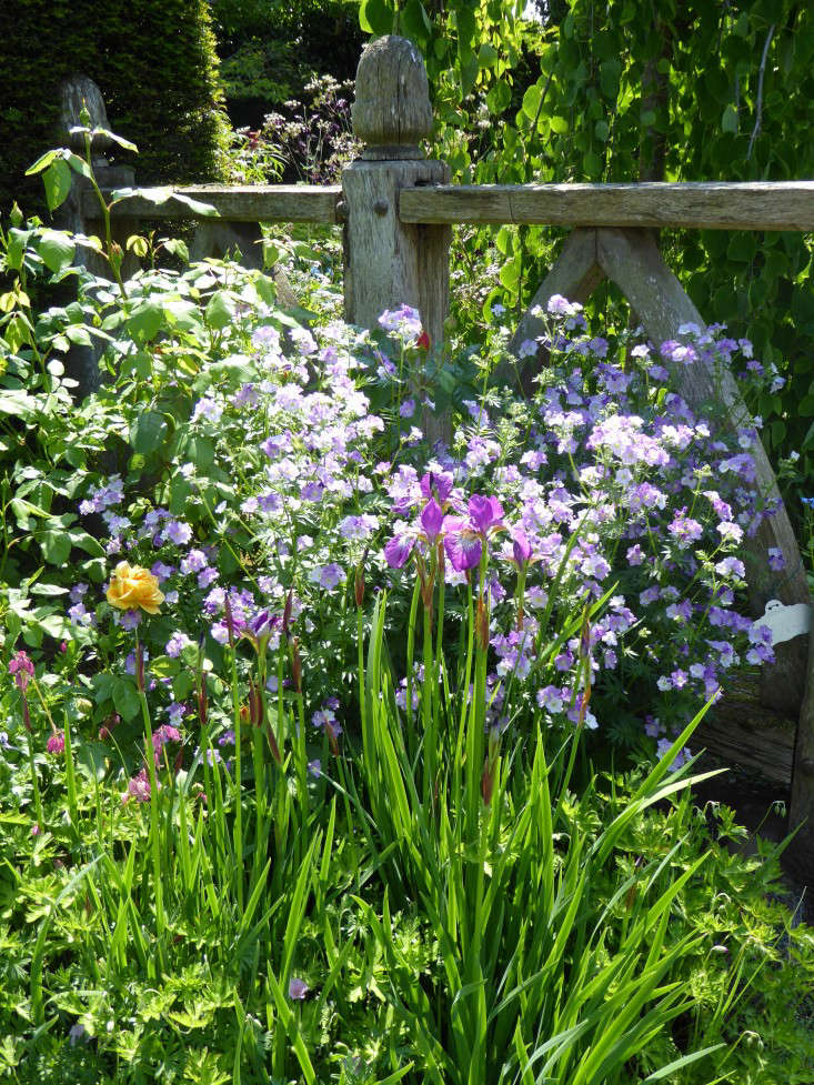 wollerton-garden-oak-wood-fence-posts-irises-gardenista