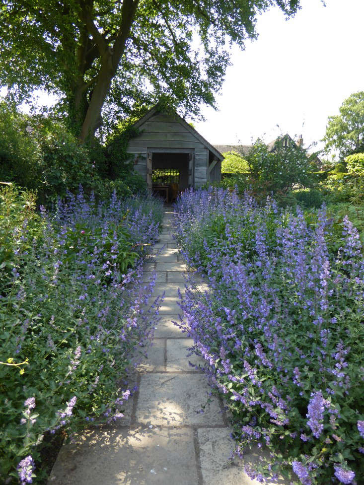 A path to a timber summerhouse is edged with Six Hills Giant catmint. See more of this garden in  Garden Ideas to Steal from Wollerton Old Hall in Shropshire. Photograph by Clare Coulson.
