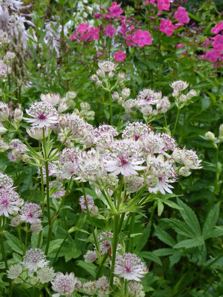 3 Sally's restrained but brilliant plant combinations