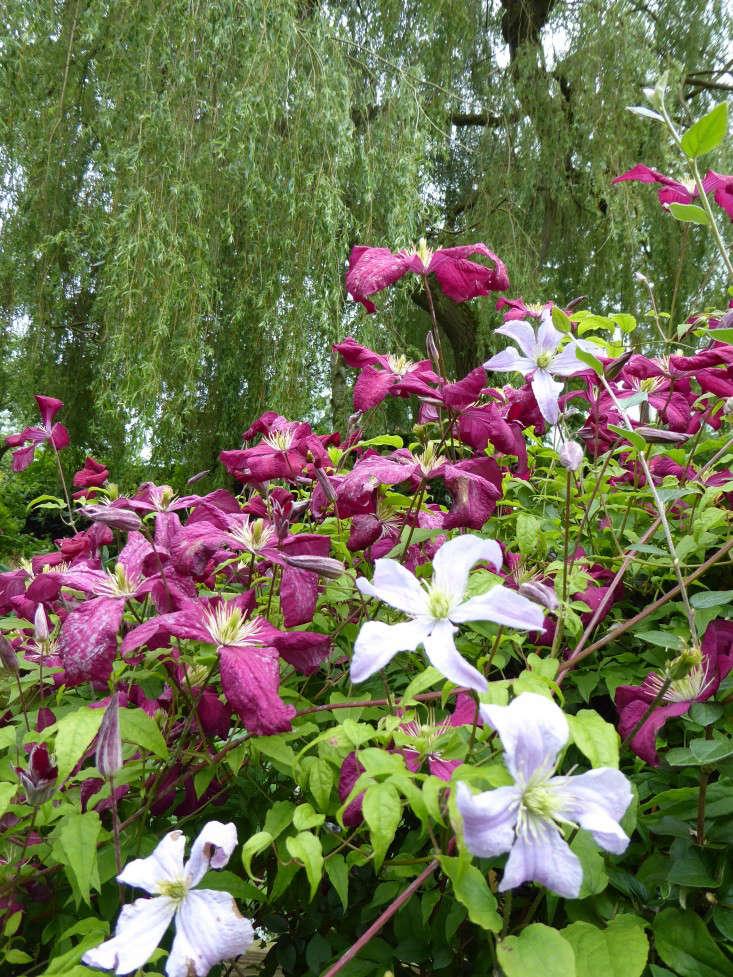 3b same plant different colours