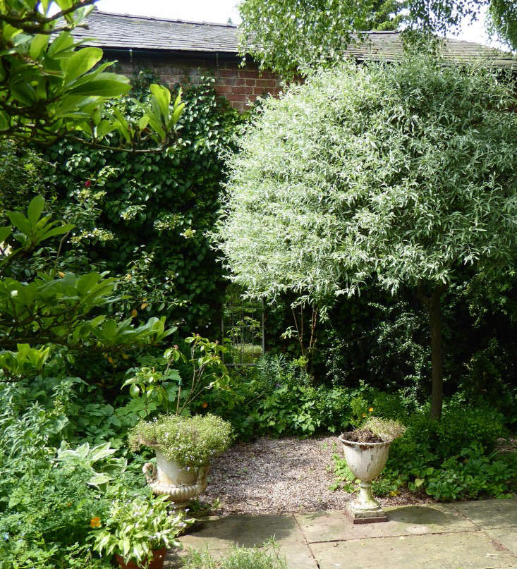 4 clipped weeping pears not only create some sturcture in a shady corner but also a wonderful contrast of greens