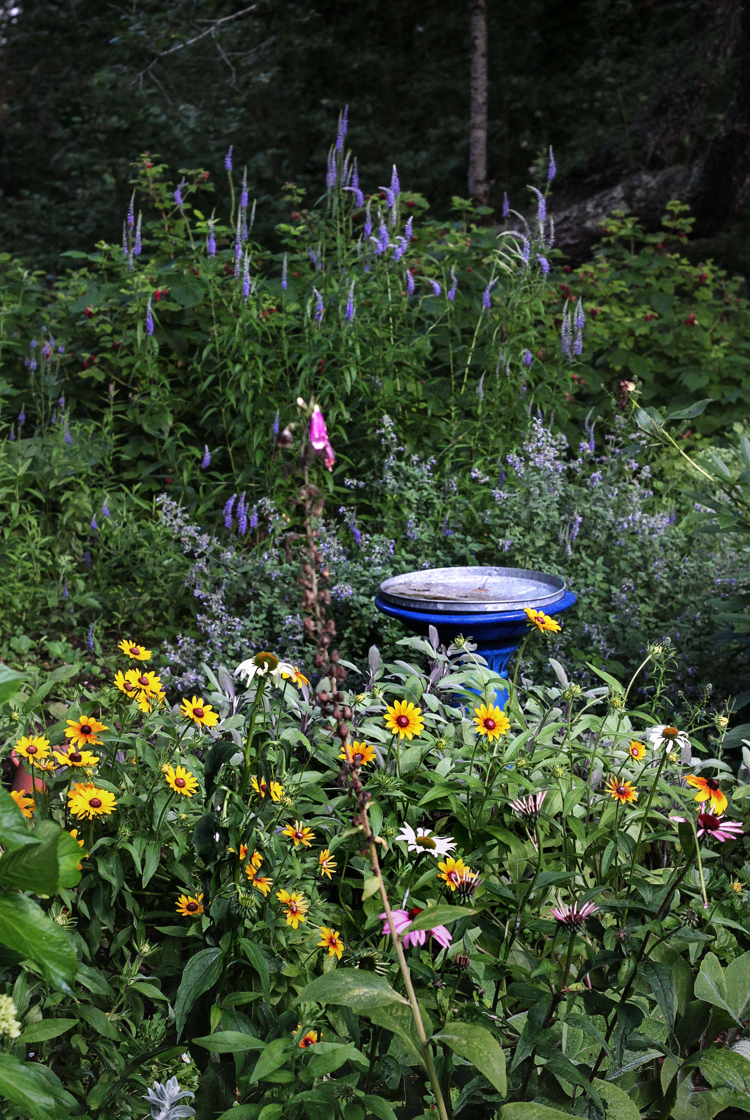 A bright blue bird bath is surrounded by flowers.