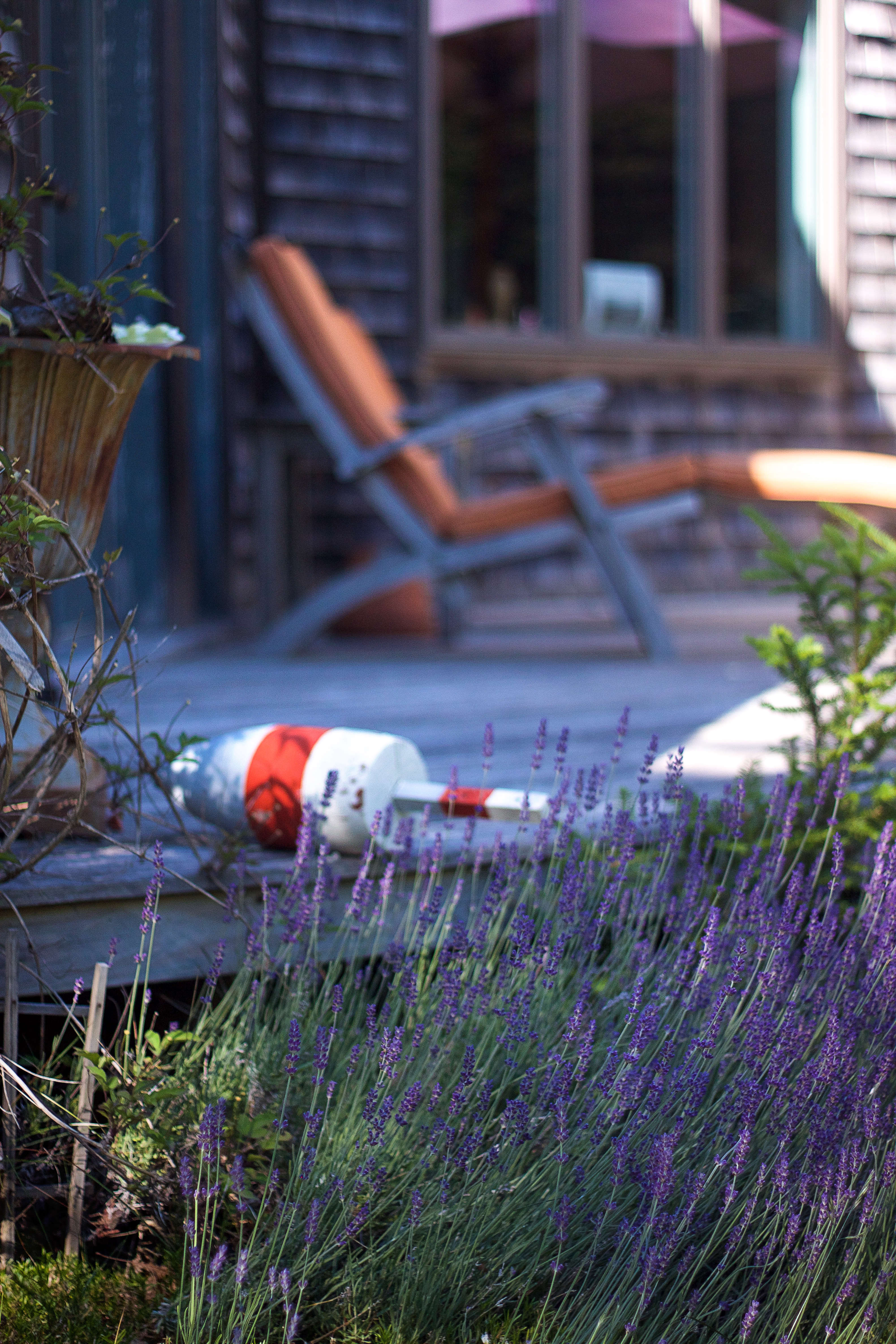 Cape Cod meets Mediterranean &#8\2\1\1; a lobster buoy found washed ashore rests on a deck bordered by a long lavender bed.