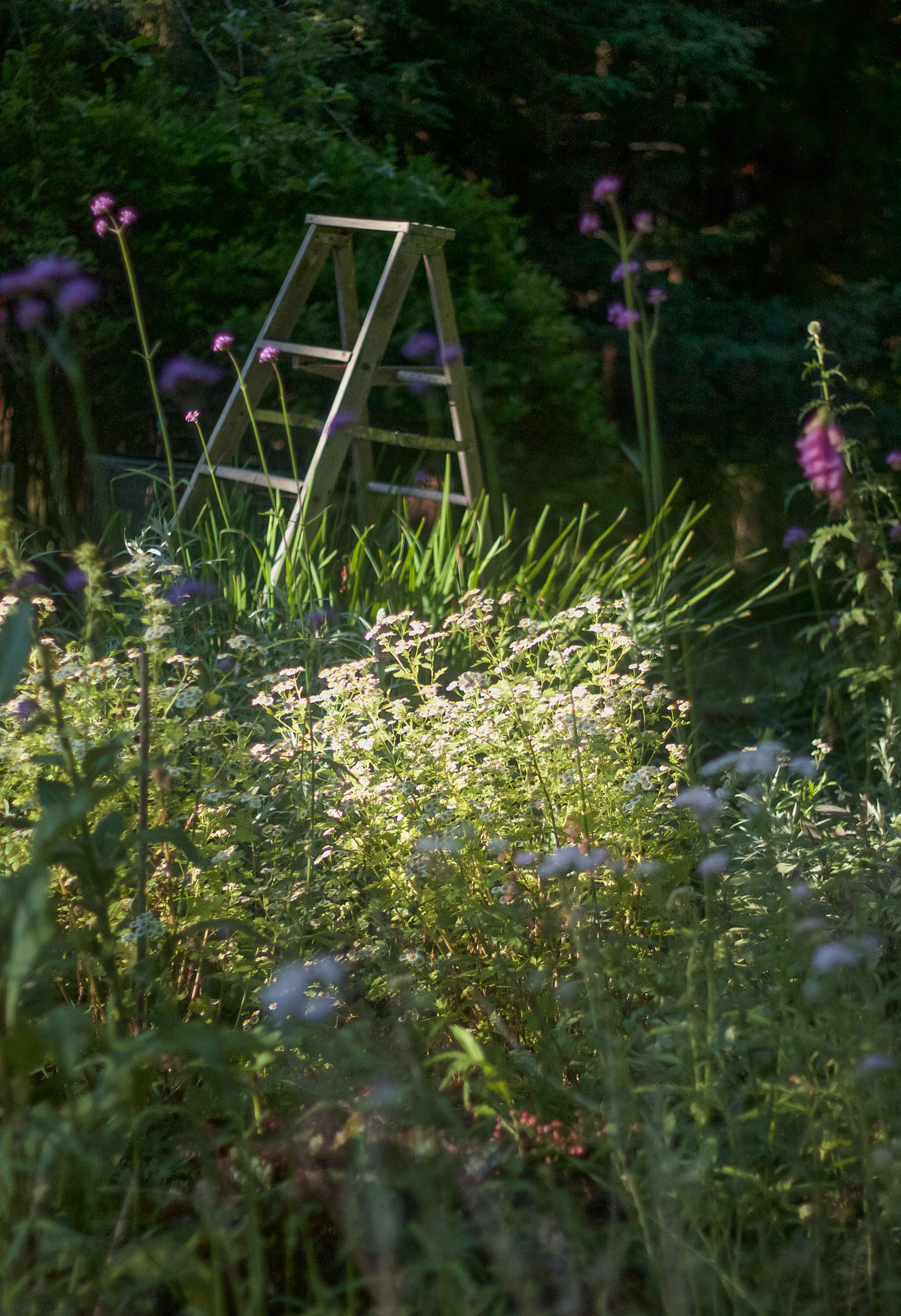 A garden ladder in the July twilight.