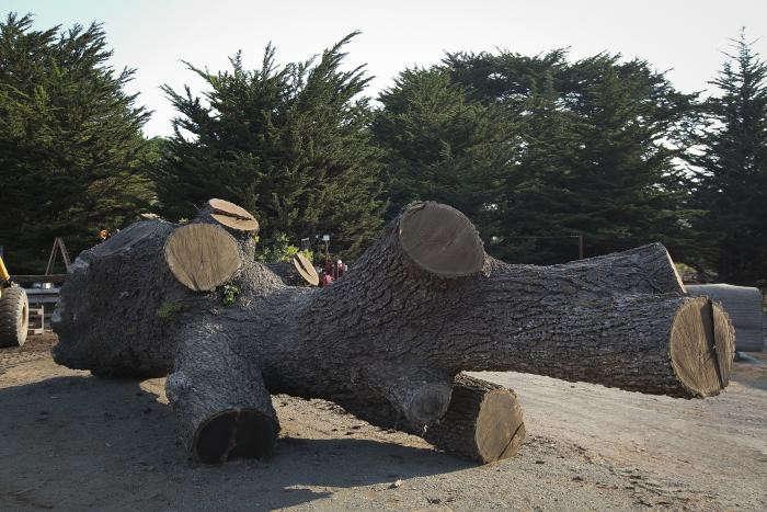 arborica-salvaged-wood-tree-trunk-gardenista