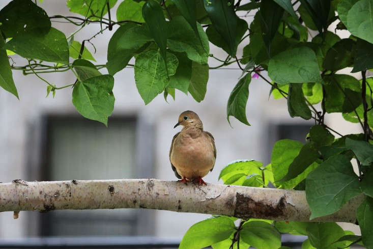 Photograph by Marie Viljoen. See more inRehab Diary: A Year in the Life of a Brooklyn Garden.
