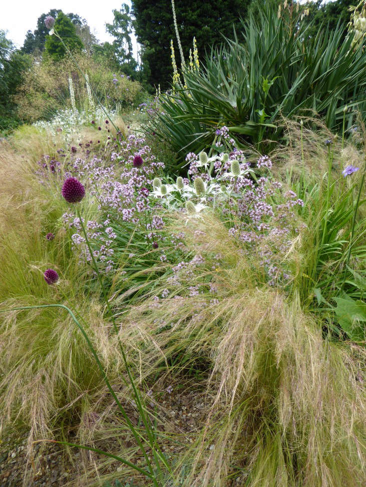 beth-chatto-gravel-garden-texture-grasses-gardenista