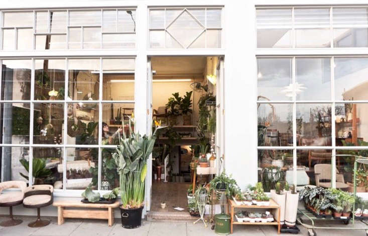 conservatory-archives-london-houseplant-house-plants-shop-gardenista
