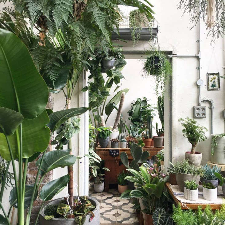 conservatory-archives-london-houseplant-house-plants-shop-hackney-gardenista