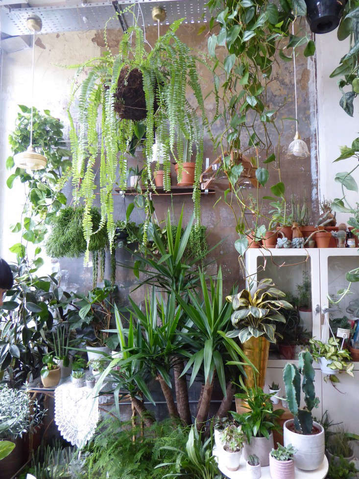 conservatory-archives-london-shop-plaster-walls-houseplants-house-plants-gardenista