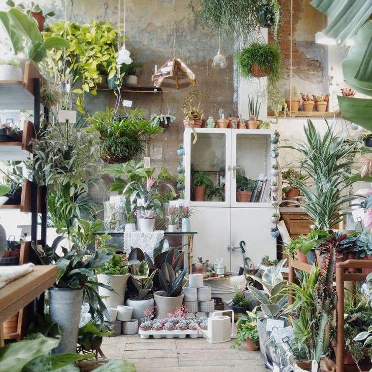 conservatory-archives-vintage-dresser-houseplant-house-house-plants-london-gardenista