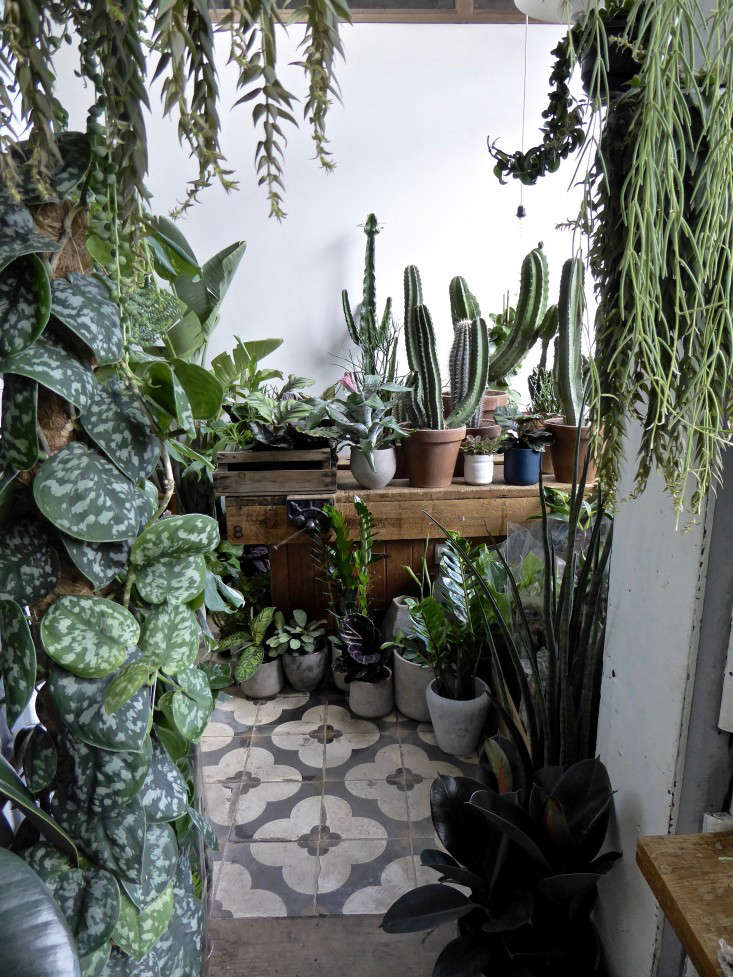 conservatory-gardens-shop-london-houseplant-house-plants-tile-floor-gardenista