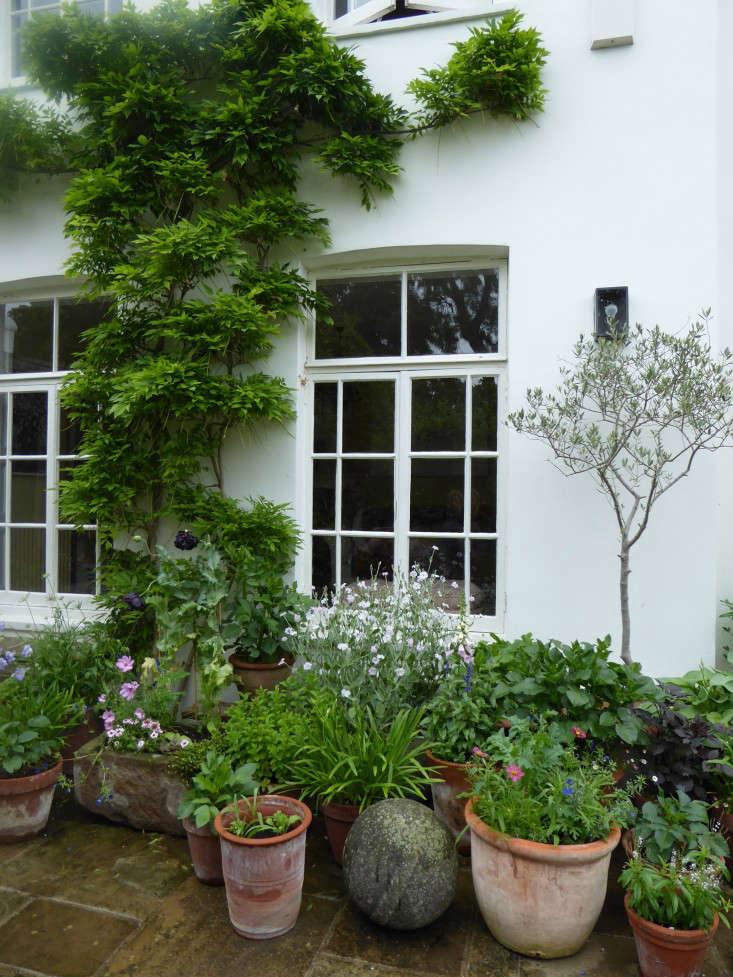 container-plants-terra-cotta--daisy-garnett-garden-london-gardenista